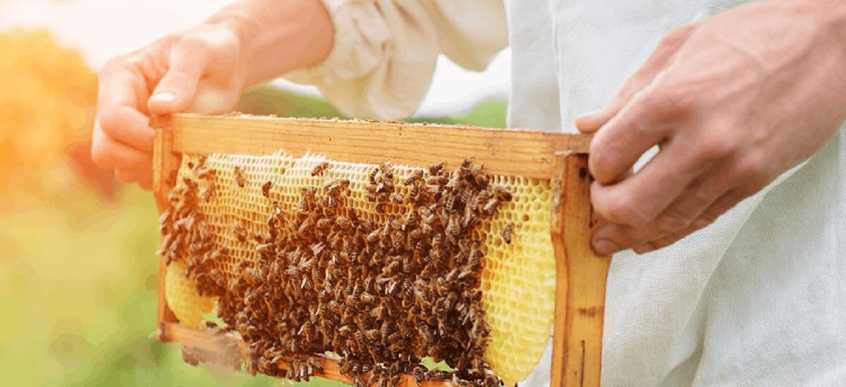 蜂蜜重金屬檢測作為環境污染指標